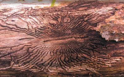 Learning Lessons from Emerald Ash Borer (EAB)