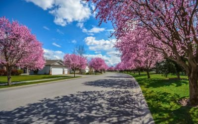 Top 5 ways to keep your trees healthy