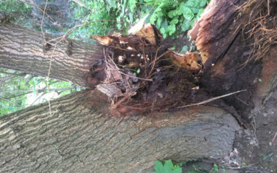 6 ways to protect yourself in case of tree/branch failure