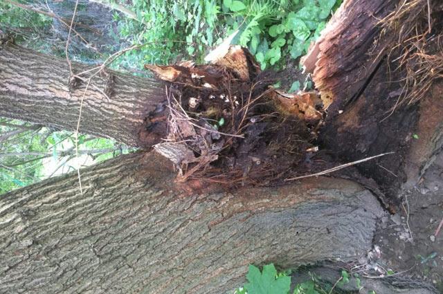 Tree Branch Failure