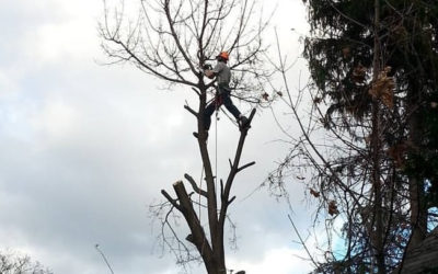 Reasons for Tree/Branch Failure