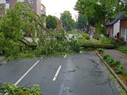tree fall over road